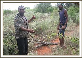 The arrested poachers made to lift their snares