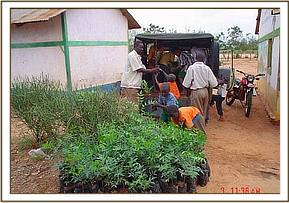 Delivering Seedlings to schools