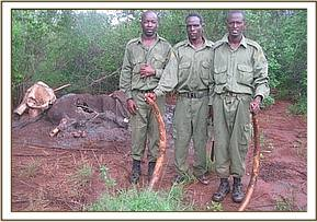 Recovered two tusks and handed to KWS