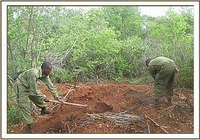 The Team destroying illegal charcoal kilns