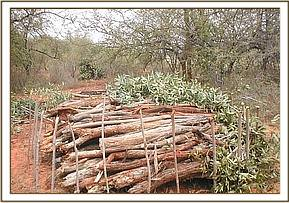 Wood for charcoal burning found in Ndii