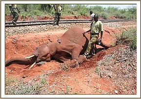 Elephant hit by cargo train