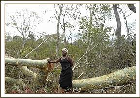 Logging in the Chyulu Hills National Park
