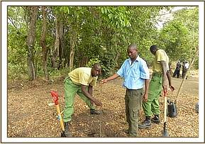 Indigenous tree planting initiative
