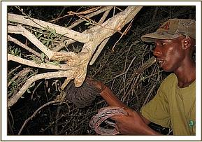 Snares found in the poachers hideout