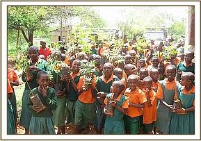 Nzayo primary received tree seedlings