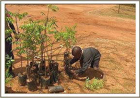 Tree seedlings given to kyusiani primary school