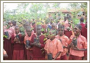Kikwasuni primary gets tree seedlings