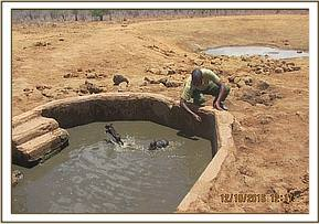 The team rescued two warthog in the water trough