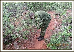 Team member removing a snare at the powerline