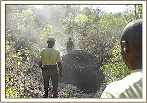 Illegal charcoal burning in the Park