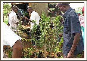 Giving Tree Seedlings to the Community