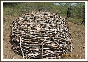 Illegal logging for charcoal production