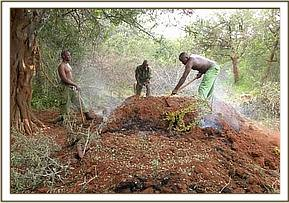 Team destroying the illegal charcoal kilns