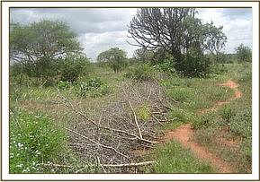 A fence set to contain animals in snares