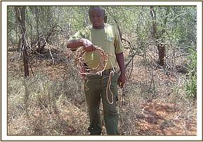 A team member displaying snares lifted