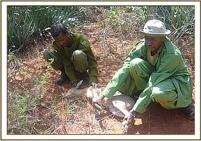 Rescuing a common duiker from a snare