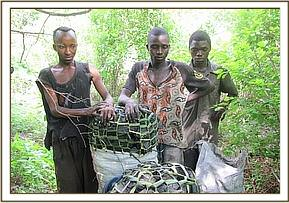 Illegal Charcoal burners arrested