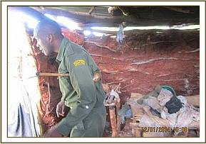 Inspecting a suspected poachers' den