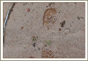 Footprint found in the Komobyo area