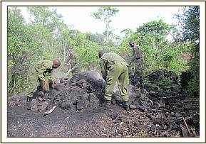 Destroying an active charcoal kiln at Utu