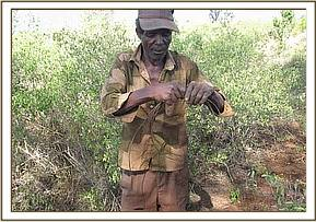 One of the arrested poachers with a snare