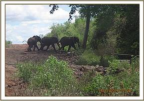 Wild elephants driven back through kibwezi gate