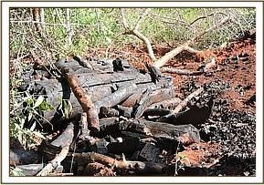 ILLEGAL CHARCOAL BURNING AND CUTTING DOWN TREES