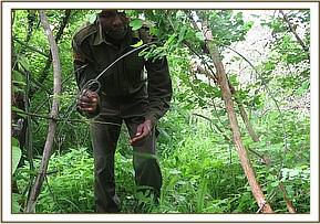 Lifting medium snares at Ciabaringo area