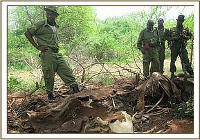 An elephant carcass found near Tsavo Farm