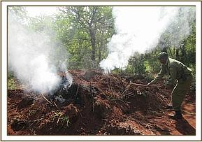 Illegal charcoal kilns being destroyed