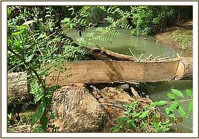 logging sighted along ura river