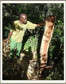 Logging at Kenze