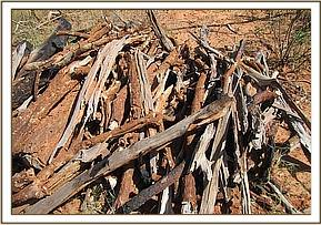 Wood pile found at Triangle