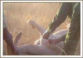 The DSWT team helping to release the Eland