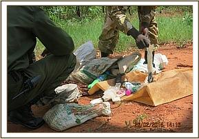 Team checking apparatus left behind by poachers