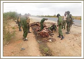 A elephant carcass  sighted along voi road