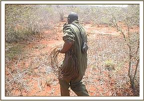 Desnaring team member with lifted snares