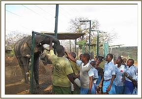 pupils receive lecture about elephants