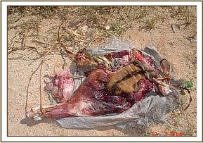 Confiscated Lesser Kudu meat