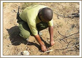 A team member lifting an underground snare