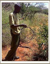 A Team member lifting snares