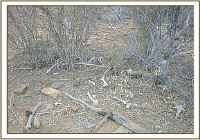 A poachers hidout with bones on the ground