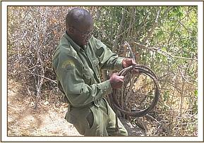 A team member lifting a large cable snare