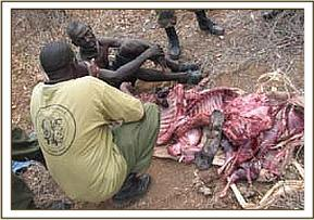 Arrested poacher with confiscated bushmeat