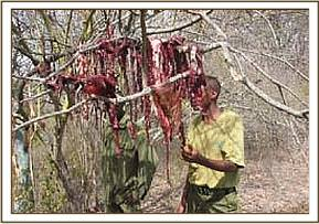 Dried bushmeat at the poachers hideout