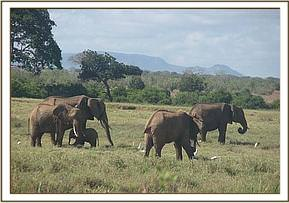 Elephants seen during the field trip