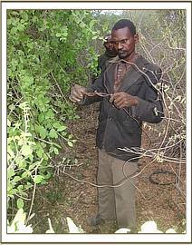 Arrested poacher lifting a large snare