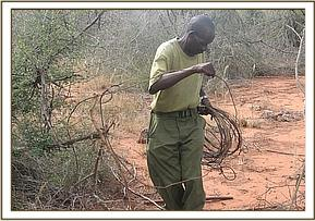 Lifting snares at Lualenyi