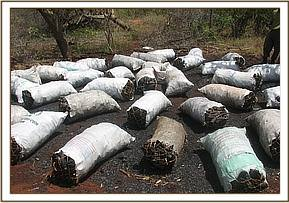 Charcoal at Sagalla Ranch